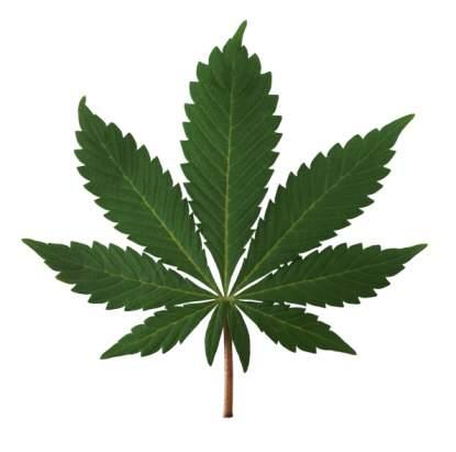 Amateurs hebben last van marijuana